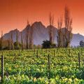Cape Town Winelands Accommodation
